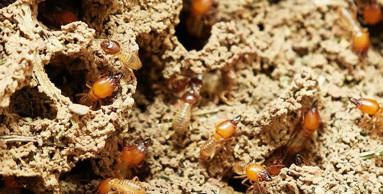 台南除白蟻、抓白蟻、白蟻整治PTT推薦